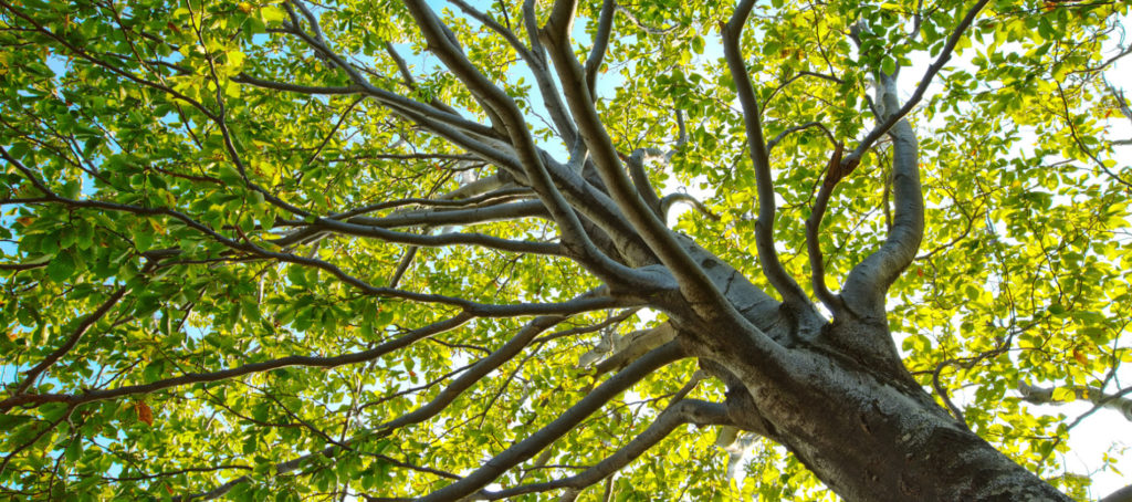 Trees and Legal Matters