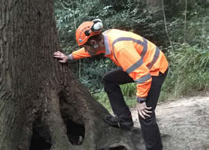 Tree Inspection & Management